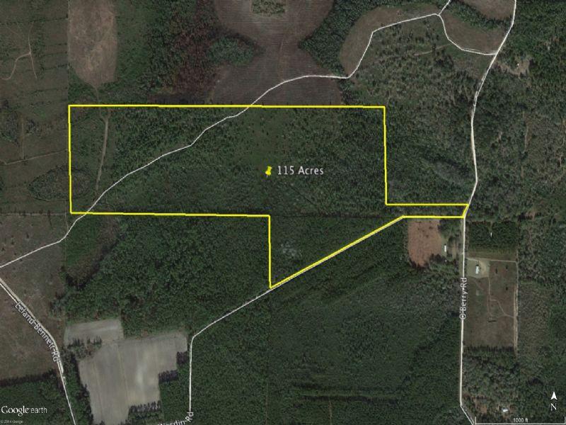115 Acres : Millwood : Ware County : Georgia