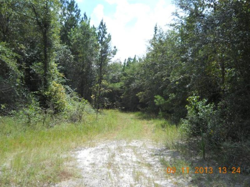 65.64 Acres On Paved Road : Madison : Madison County : Florida