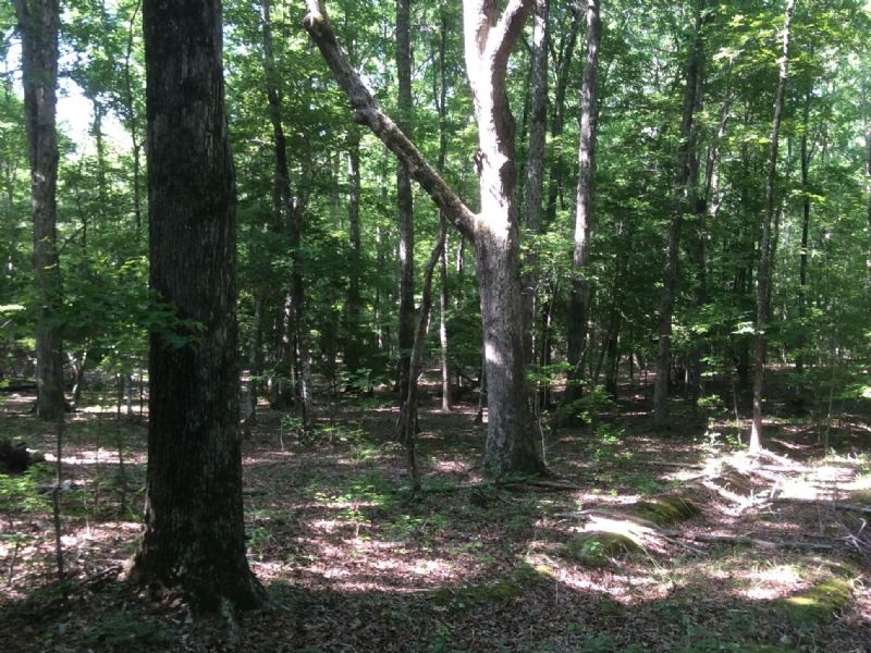 86 Acres - Camden, Sc : Camden : Kershaw County : South Carolina