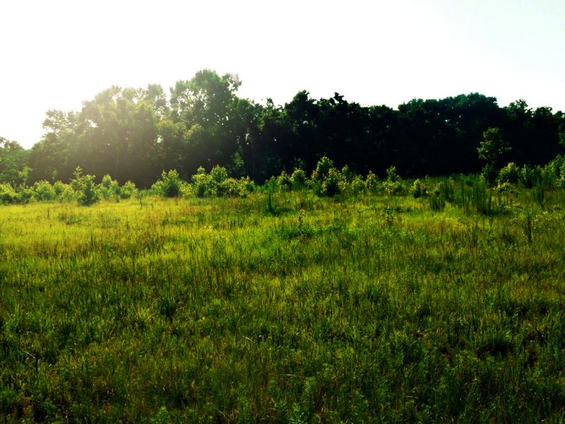Strawberry Hill : Rocky Ford : Screven County : Georgia