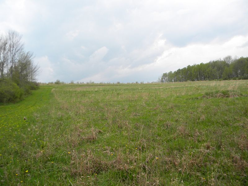 47 Tillable Acres Pond Hunting : Rathbone : Steuben County : New York