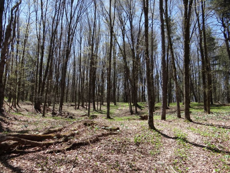 Wooded Land Near Cooperstown : Fly Creek : Otsego County : New York