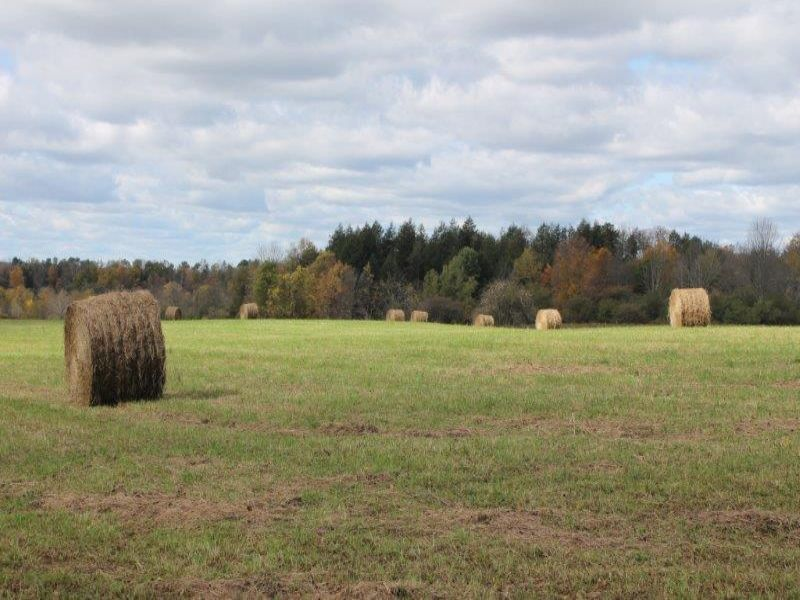55 Acres - Owner Financing : Newport : Herkimer County : New York
