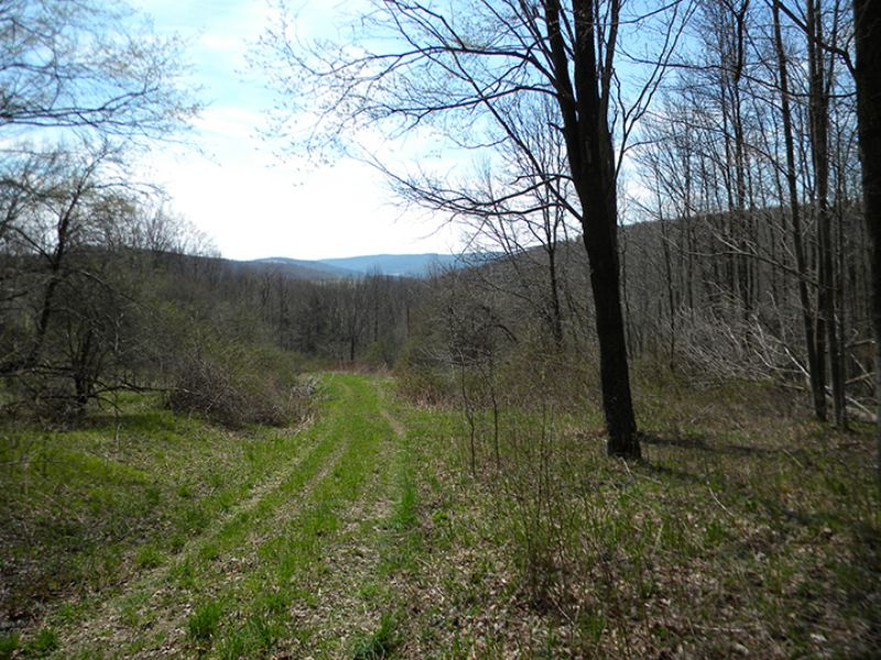 23 Acres Of Hunting Land : West Union : Steuben County : New York