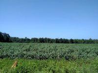 Country Farm Close To Savannah