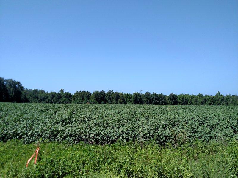 Country Farm Close To Savannah : Brooklet : Bulloch County : Georgia