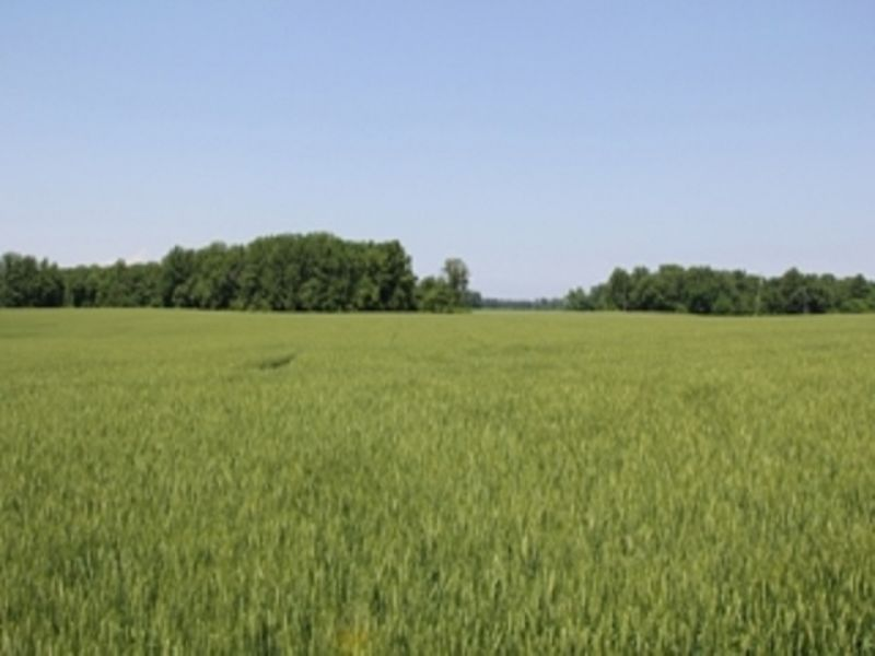 92± Acre Multi-parcel Farm Auction : Heathsville : Northumberland County : Virginia