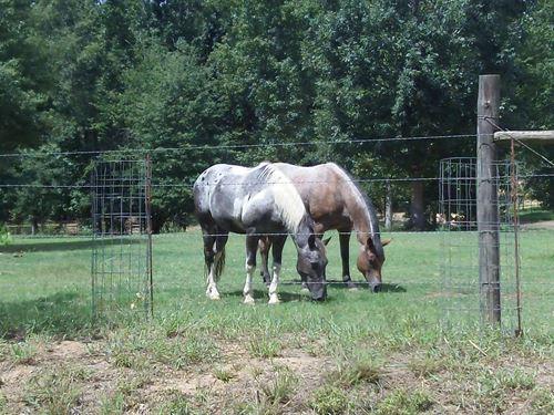 Barnes Mountain Farms, 5.09 Acre : Monticello : Jasper County : Georgia