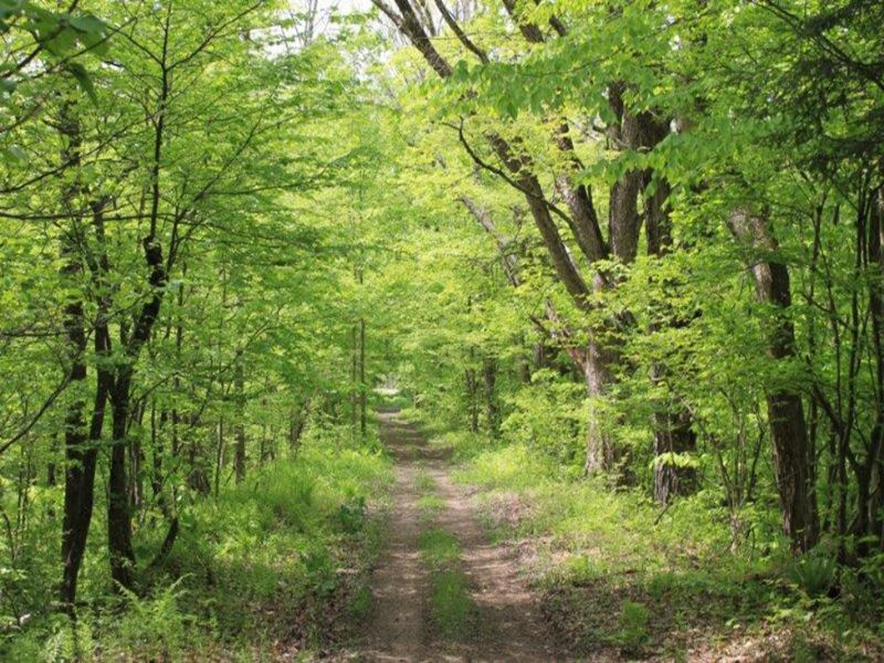 10 Acres Tug Hill Paradise : Williamstown : Oswego County : New York