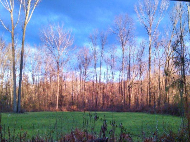 Froggy Bottom : Farmville : Prince Edward County : Virginia