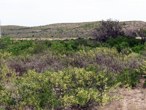 Southern Edwards Plateau : Comstock : Val Verde County : Texas