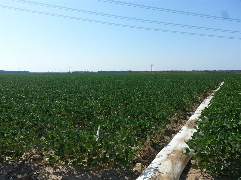 1,272 Acre Row Crop Paradise : Wheatley : Saint Francis County : Arkansas