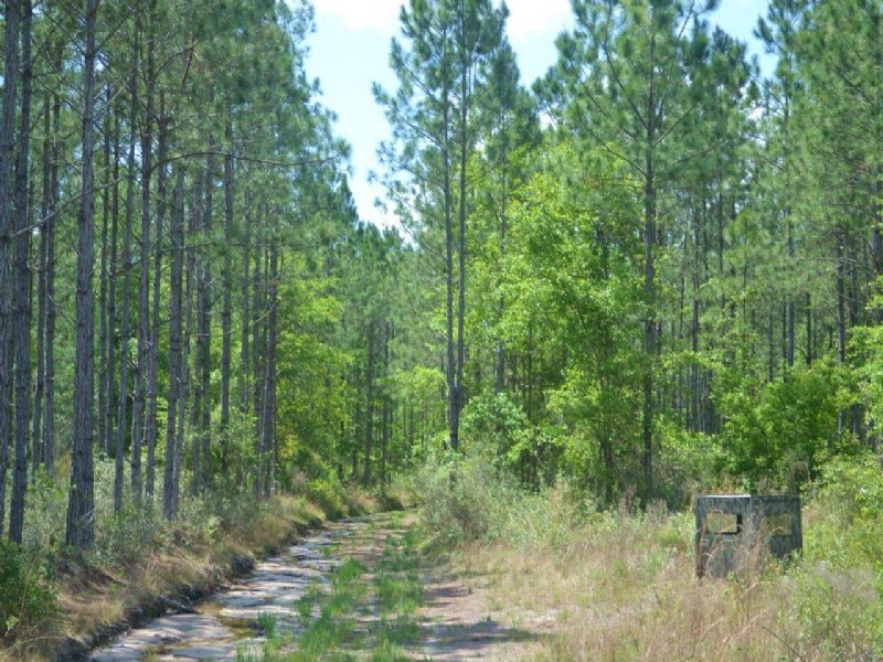 Hunting Tract : Gainesville : Alachua County : Florida