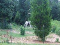 Turkey Creek Farms - 3.96 Acre Lot