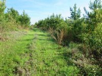 80 Acres Of Hunting Land