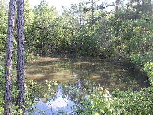 58.5 Ac. Hardwood & Pine Rec Tract : Braxton : Simpson County : Mississippi