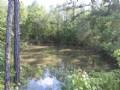 Beautiful Hardwood & Pine Rec Tract