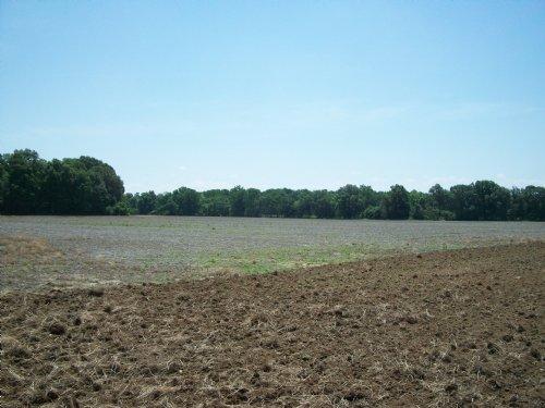 196.43 +/- Acres Farm & Timberland : Marvell : Phillips County : Arkansas