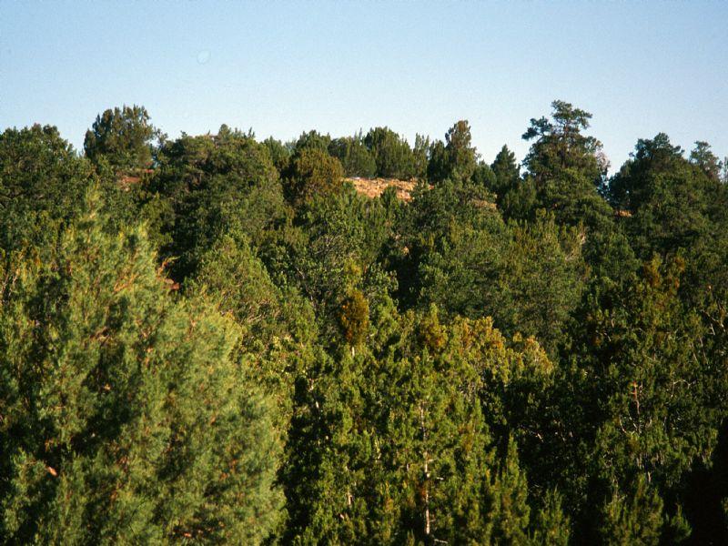 Self Sufficiency Wilderness Ranch : St. Johns : Apache County : Arizona