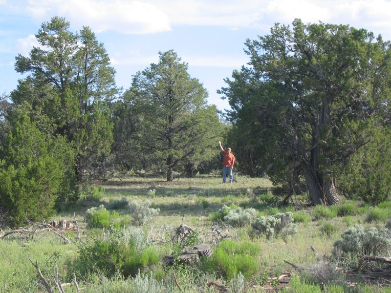 Secluded Self Sufficiency Ranch : St. Johns : Apache County : Arizona