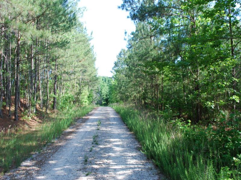 55 Acres Near National Forest : Union : Union County : South Carolina