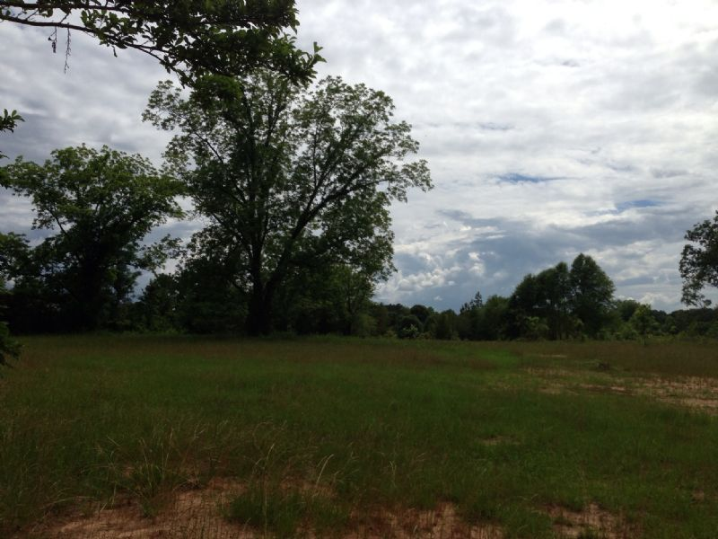 80 +/- Ac Near Petrey : Petrey : Pike County : Alabama