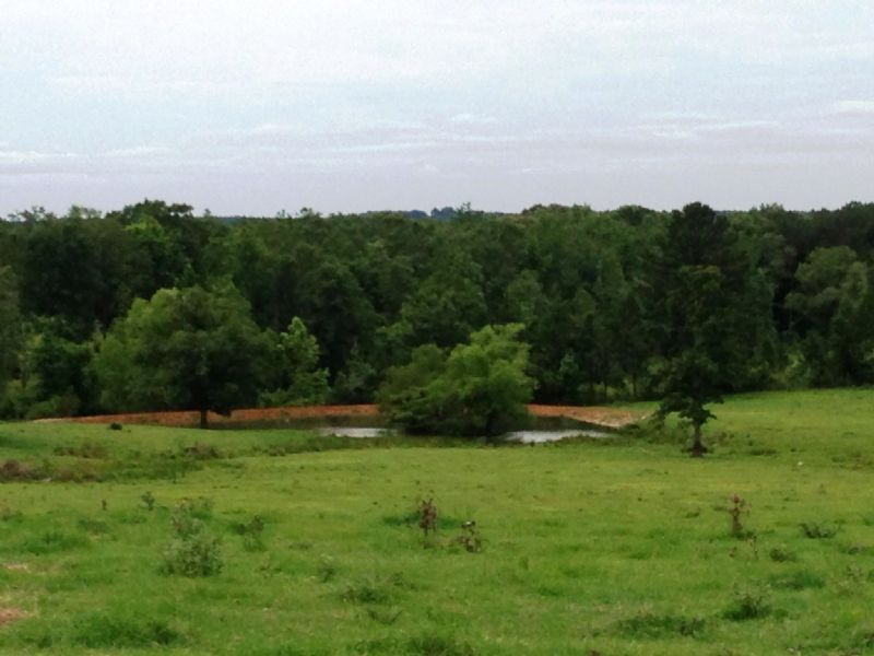 50 +/- Ac Of Improved Pasture : Other : Coffee County : Alabama