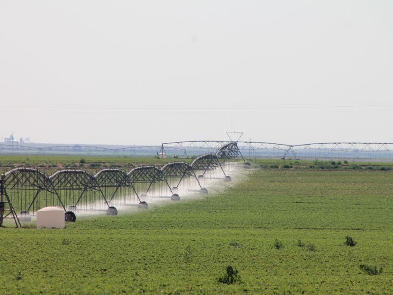 Irrigated Row Crop Farm : Morton : Cochran County : Texas