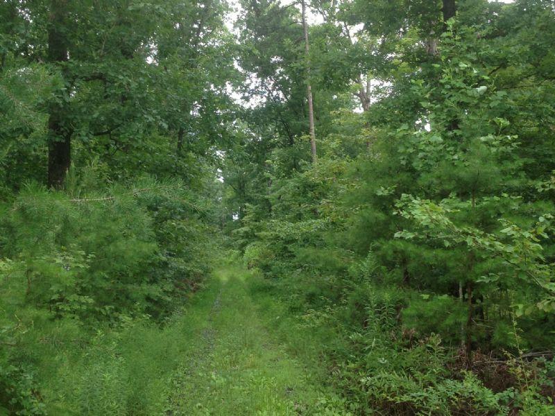 45 Acres Timber Land : Howardsville : Buckingham County : Virginia
