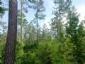 Hunting & Timber Land