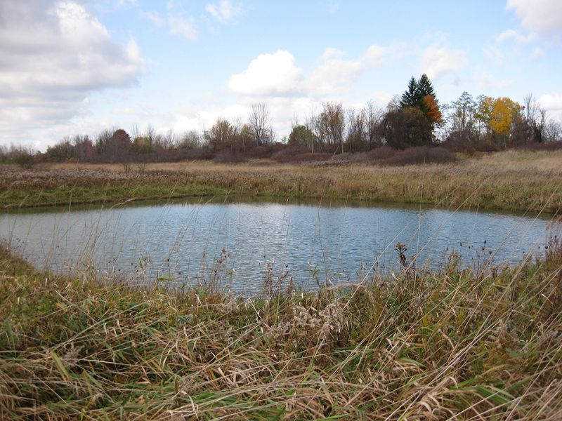 70 Acres Driveway Pond Views : Root : Montgomery County : New York