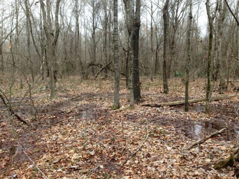 60 Ac - Nice Wrp Deer Hunting Tract : Eudora : Chicot County : Arkansas