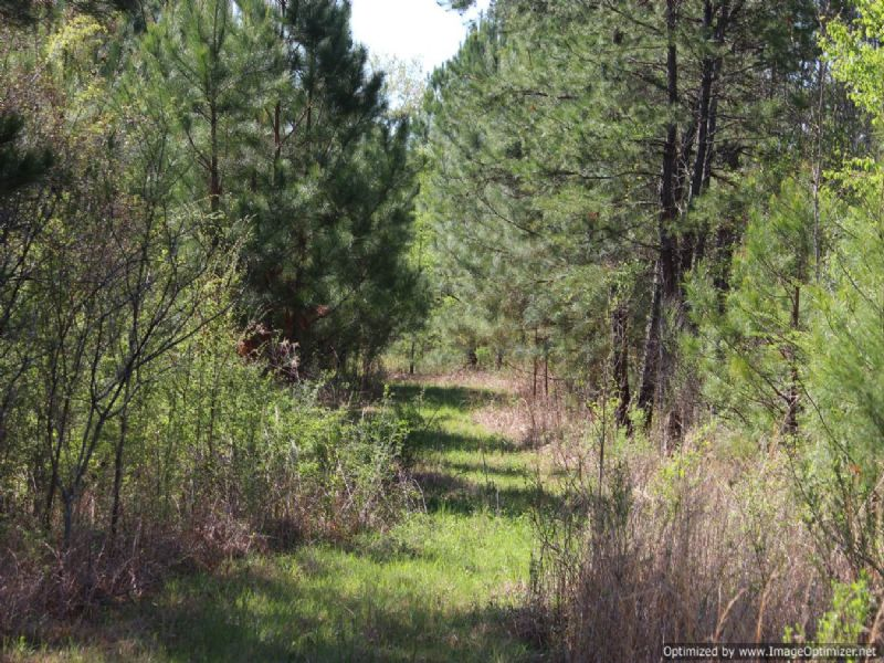 Outstanding 34 Ac. Estate/rec Tract : Camden : Madison County : Mississippi
