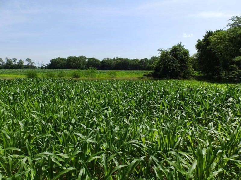 163 Acres, Incredible Deer Hunting : El Dara : Pike County : Illinois