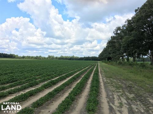 Farmland in Aiken And Barnwell : Williston : Barnwell County : South Carolina