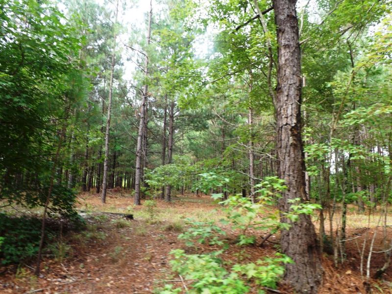 Spencer Pines : Millen : Jenkins County : Georgia