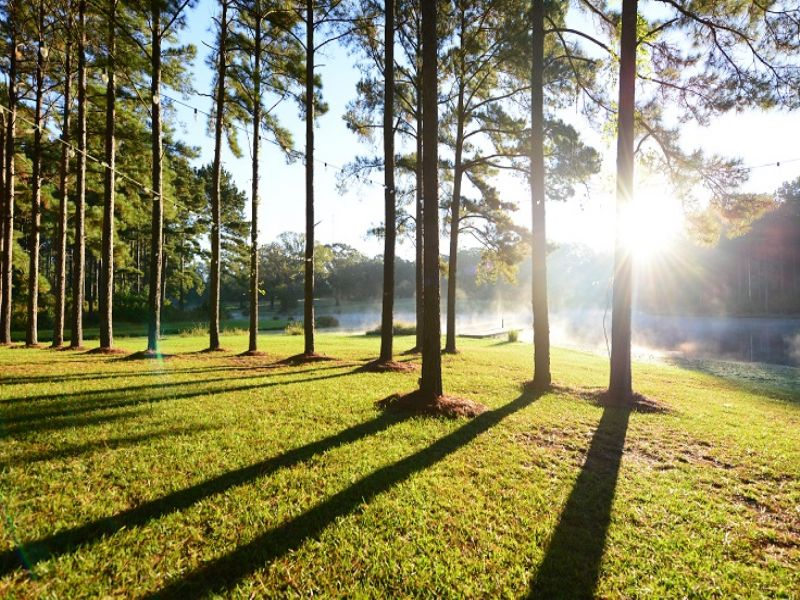 A Sportsman's Paradise In Sw Ms : Gloster : Amite County : Mississippi