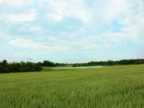 2000+ Acre Texas Farm & Ranch : Roxton : Lamar County : Texas
