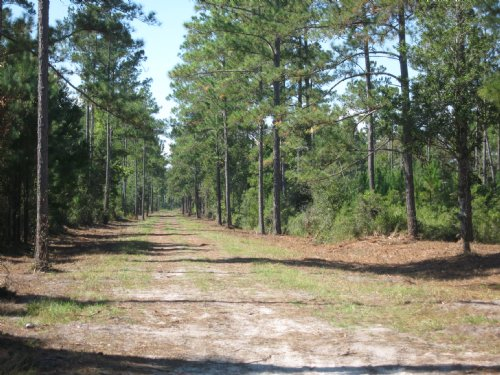 Acreage Close To Town : Kingsland : Camden County : Georgia