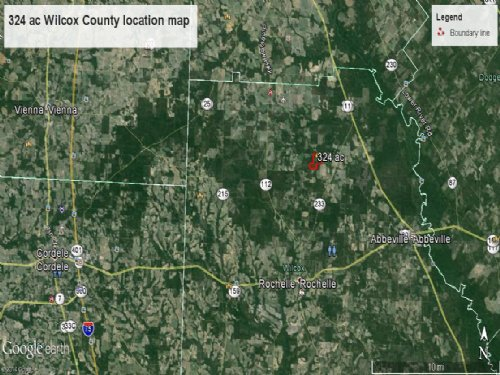 Cheap Hunting Land Planted Pines : Abbeville : Wilcox County : Georgia