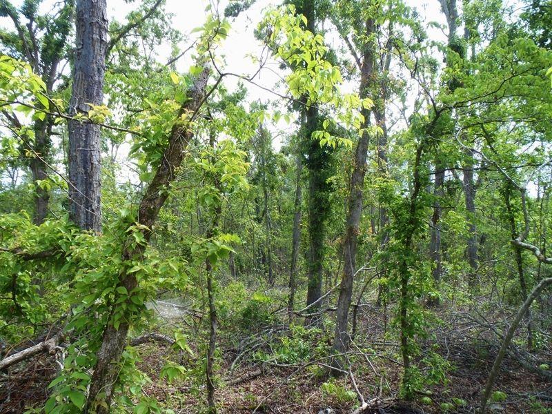 Wooded Traxx : Hugo : Choctaw County : Oklahoma