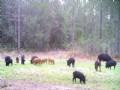 53 Acres With Wildlife Galore
