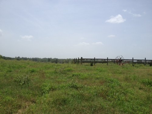 74.3 Acres Of Pasture : Lexington : Oglethorpe County : Georgia