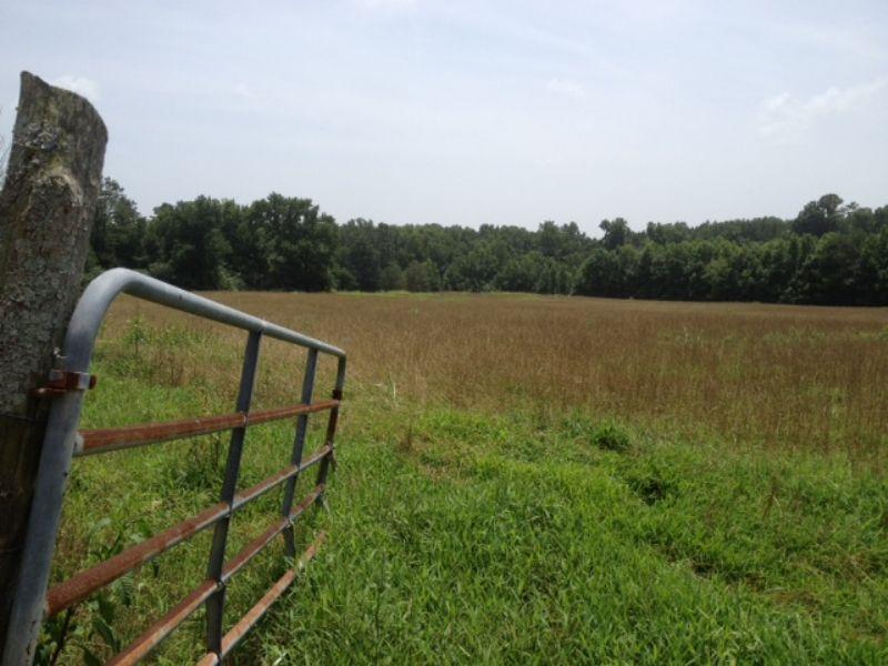 44.5 Acre Tract With Creek : Lexington : Oglethorpe County : Georgia