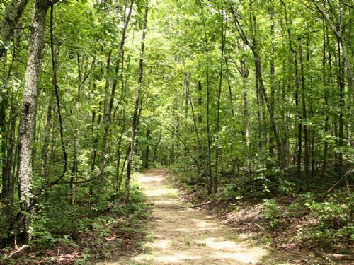 320 Acres- 25 Minutes To Birmingham : Pell City : Saint Clair County : Alabama