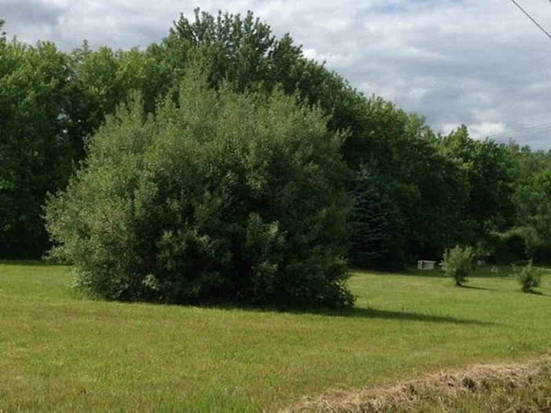 7.5 Acre Country Property : Nescopeck : Luzerne County : Pennsylvania