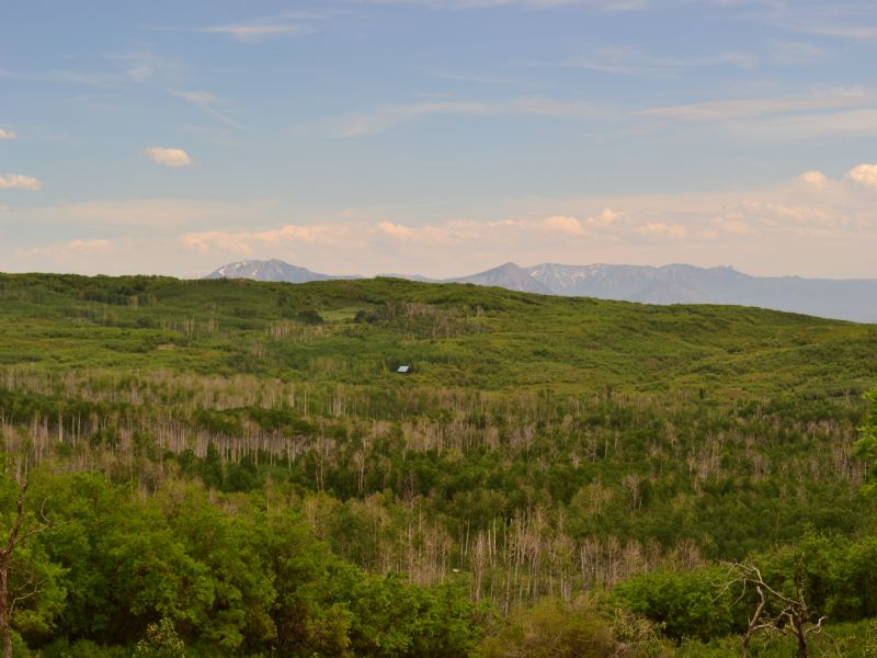 Surface Creek Ranch : Cedaredge : Delta County : Colorado