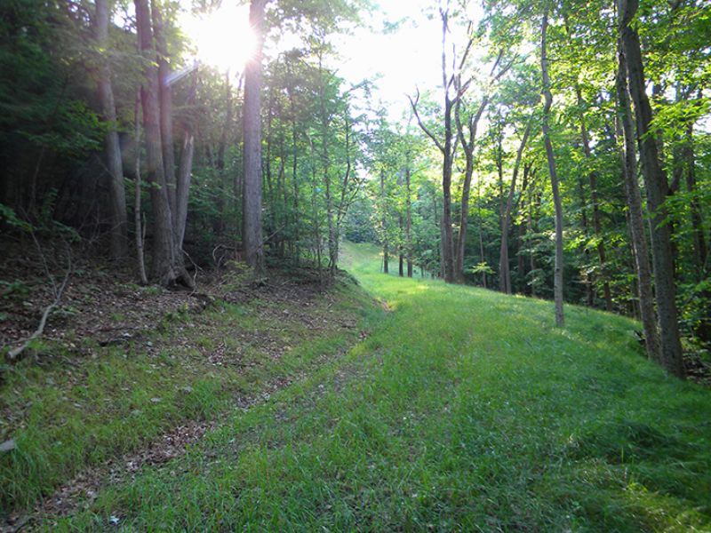 33 Acres Woods Timber Driveway : Danby : Tompkins County : New York