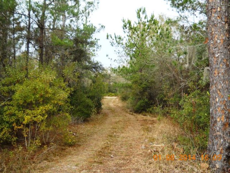 Excellent Hunting Property : Lake City : Columbia County : Florida