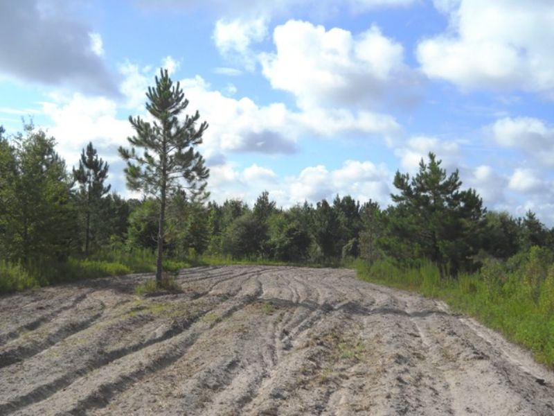 40 Acres In The Country : Live Oak : Suwannee County : Florida
